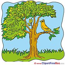 Bird Tree Pics Summer free Cliparts