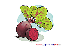 Beet download printable Illustrations