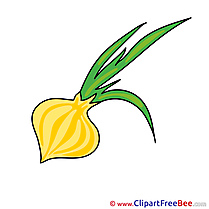 Onion free printable Cliparts and Images