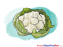 White Cabbage printable Illustrations for free