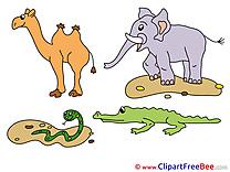 Camel Snake Pics download Illustration