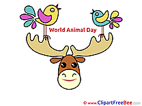 Deer Images download free Cliparts