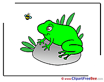 Frog download printable Illustrations