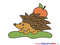 Hedgehog free Cliparts for download