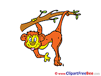 Monkey free printable Cliparts and Images