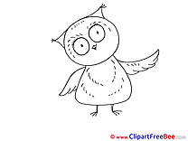 Owl printable Images for download