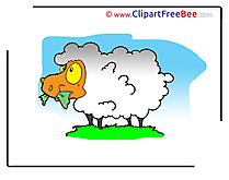 Pics Sheep free download Image