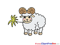 Sheep Clipart free Illustrations