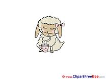 Tea Sheep Pics free download Image