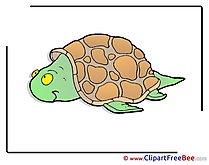 Turtle Clipart free Illustrations