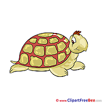 Turtle Clipart free Image download